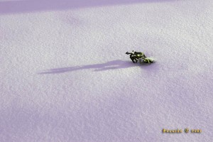 A single leaf on a bed of snow