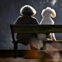 A woman sits on a park bench with her dog along the waterfront beach of Ambleside Park in West Vancouver