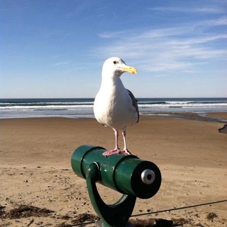 This Seagull is looking for handouts!