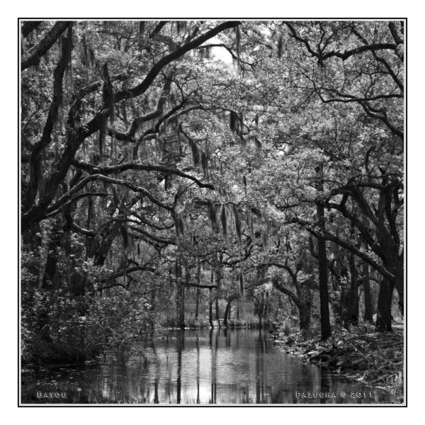 With all the water coming down I paged past this image from a trip to SC in 2009 and decided it fit my mood.