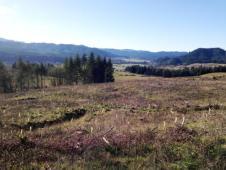 surrounding terrain