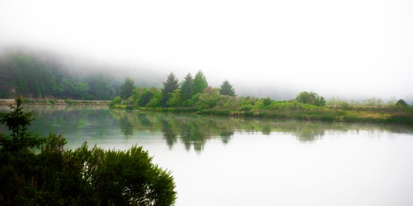 Another of the series from the July 15 fog this one @ Smith River