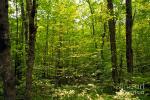 wisconsin--forest-carol-barrington