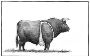 tits-on-a-bull