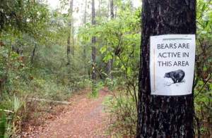 alexander-springs-bear-sign