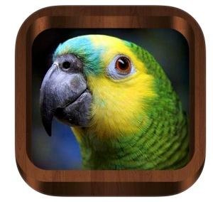 4500 Bird Calls