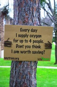 every day I make enough oxygen