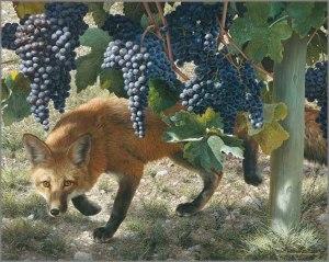 foxes-vine1