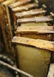 farmed-honeycomb