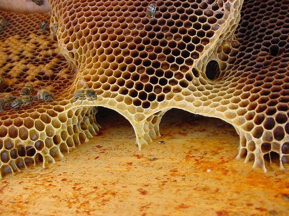 natural-hive