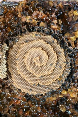 spiral-bee-hive