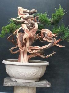 gnarly-bonsai