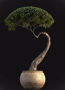 upright-bonsai