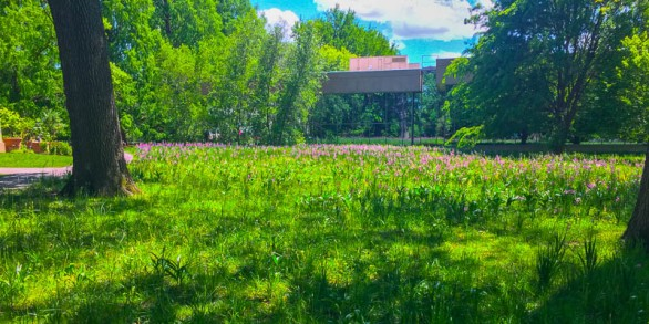 Another view of the Crocus Garden