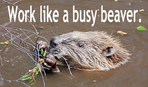 Work-like-a-busy-beaver