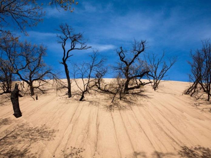 Indiana Dune