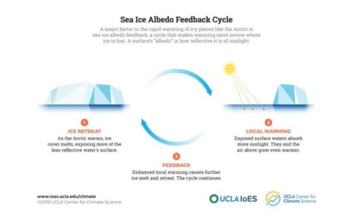sea ice albedo feedback